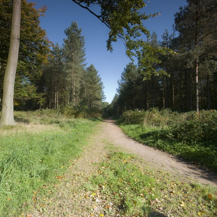 cannock_chase_path